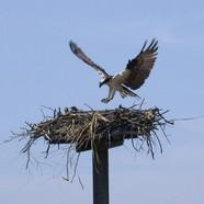 bird 3.jpg