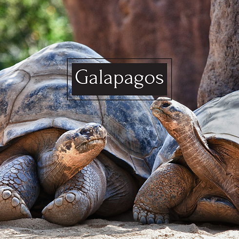 Galapagos new one jan 27 2021.png