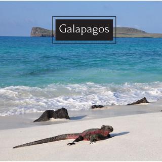 Galapagos 1.jpg