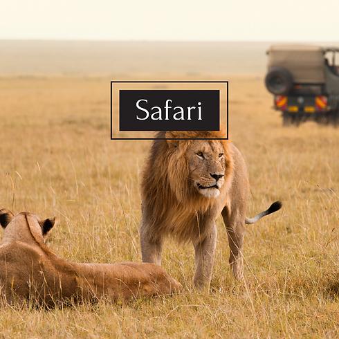 Safari jan 28 2021.png