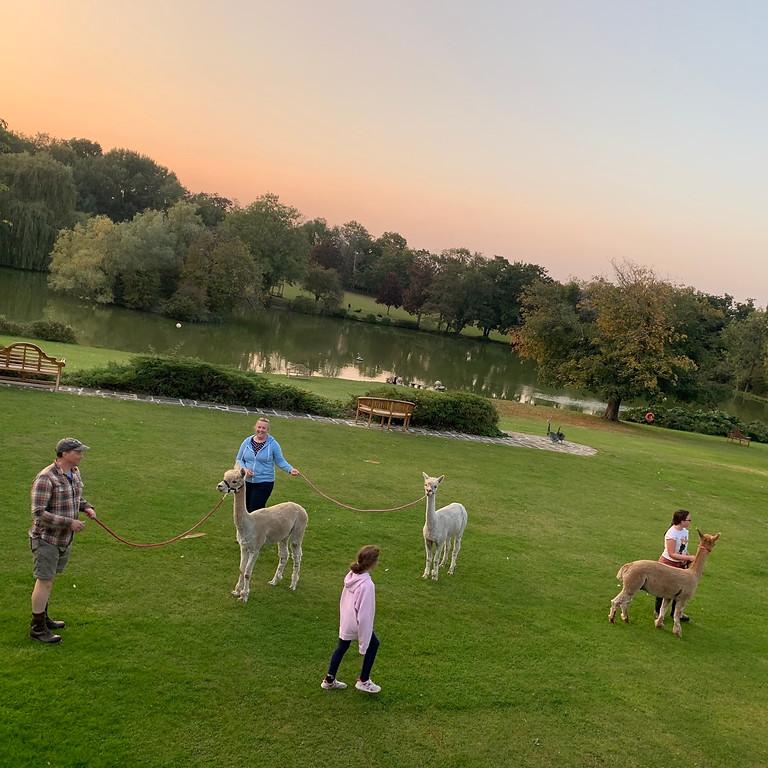 Alpaca Walking for 4 people