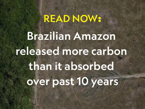 Brazilian Amazon released more carbon than it absorbed over past 10 years