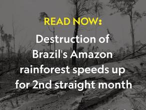 Destruction of Brazil's Amazon rainforest speeds up for 2nd straight month