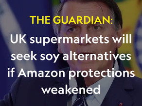 UK supermarkets will seek soy alternatives if Amazon protections weakened
