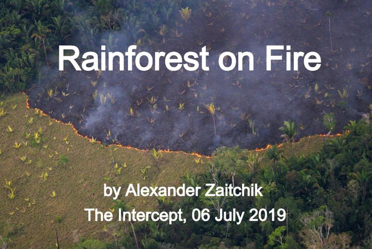 Rainforest on FIre