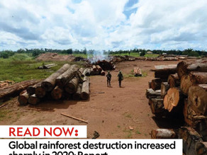 Global rainforest destruction increased sharply in 2020: Report