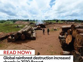 Global rainforest destruction increased sharply in 2020: Report