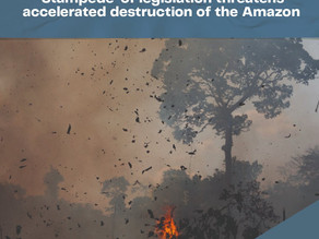 'Stampede' of legislation threatens accelerated destruction of the Amazon