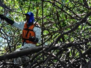 Anger as Brazil revokes mangrove protection regulations