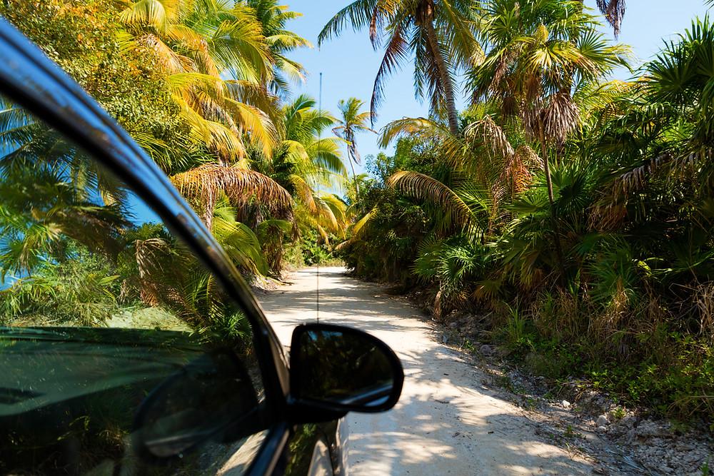 mexico tropical