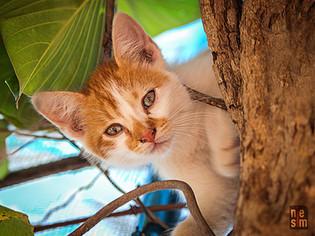 Chaton à Trinidad, Cuba © niesim