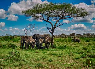Groupe d'éléphants, Tanzanie, Afrique © niesim