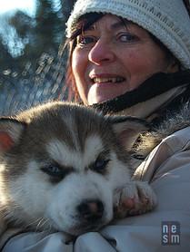 Soso et un chien de traineau, Québec, Canada, © niesim