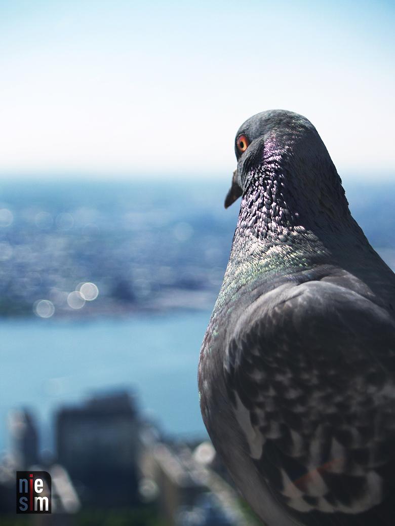 Pigeons sur le toit! Empire State ©