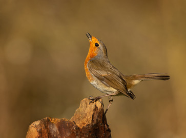 'Robin Display' by Valerie McKee - Accepted