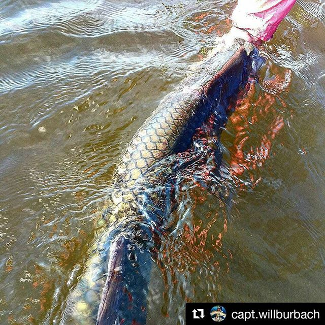 Thank you _capt.willburbach, I can't wait to fish with you again! _#MulletRun2016 #Repost _capt