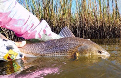 Lots of pink & tailing toads - October is my favorite month 💕🎣