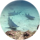 whitetip3.png
