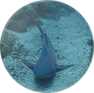 whitetip2.png