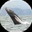baleine saut.png