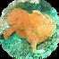 frog fish.png