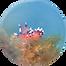 nudibranche.png