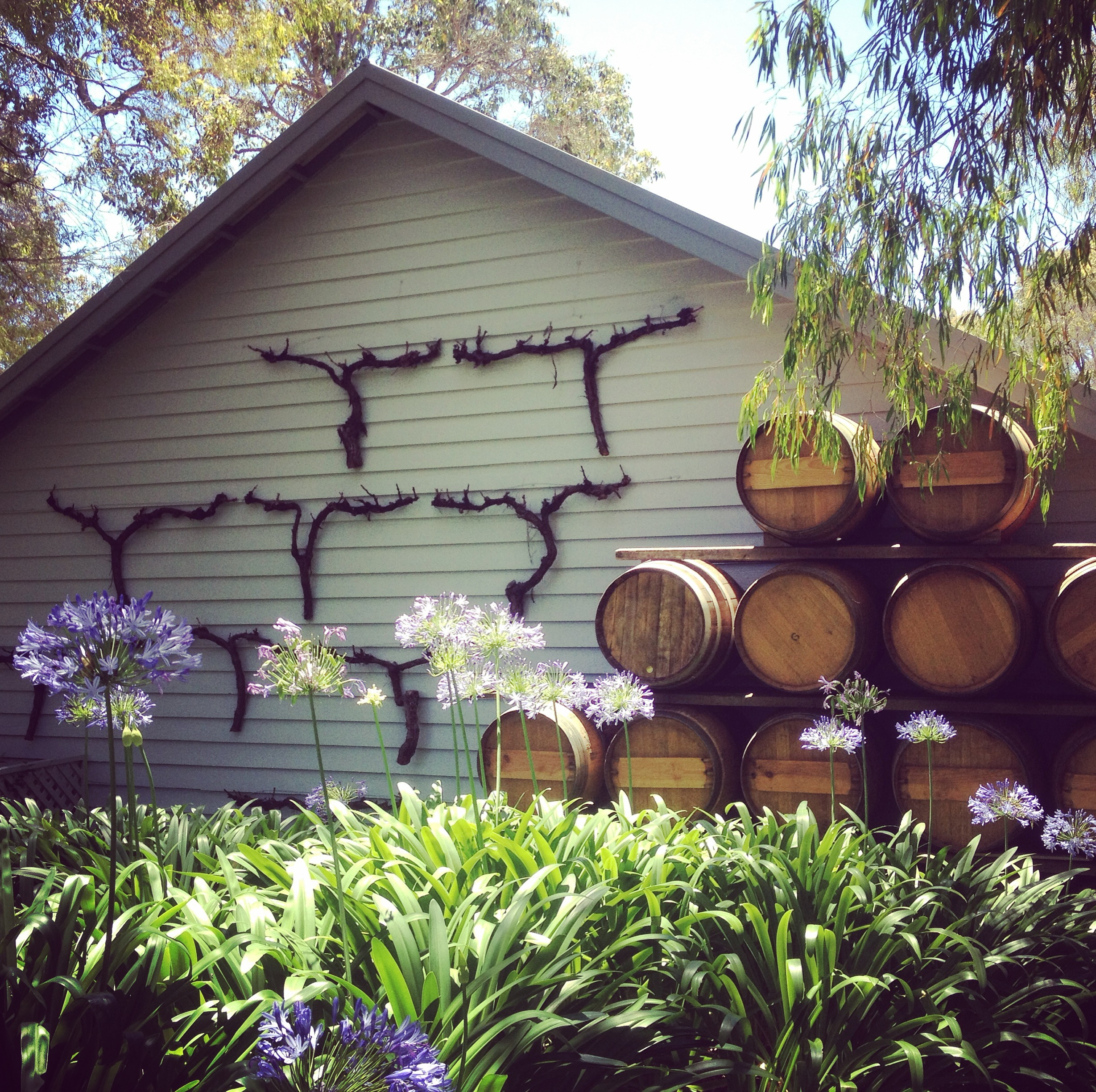 Brookland Valley Winery