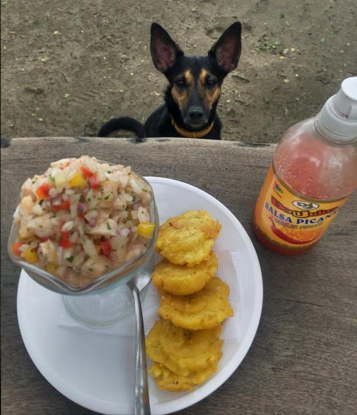 Finn Casa Horizon ceviche tostones playa escameca nicaragua beach dog photo by john early
