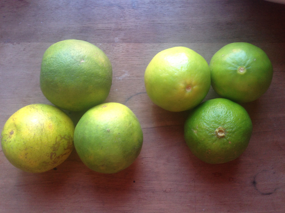 Oranges and limes in Central america...look identical (Photo by John Early)