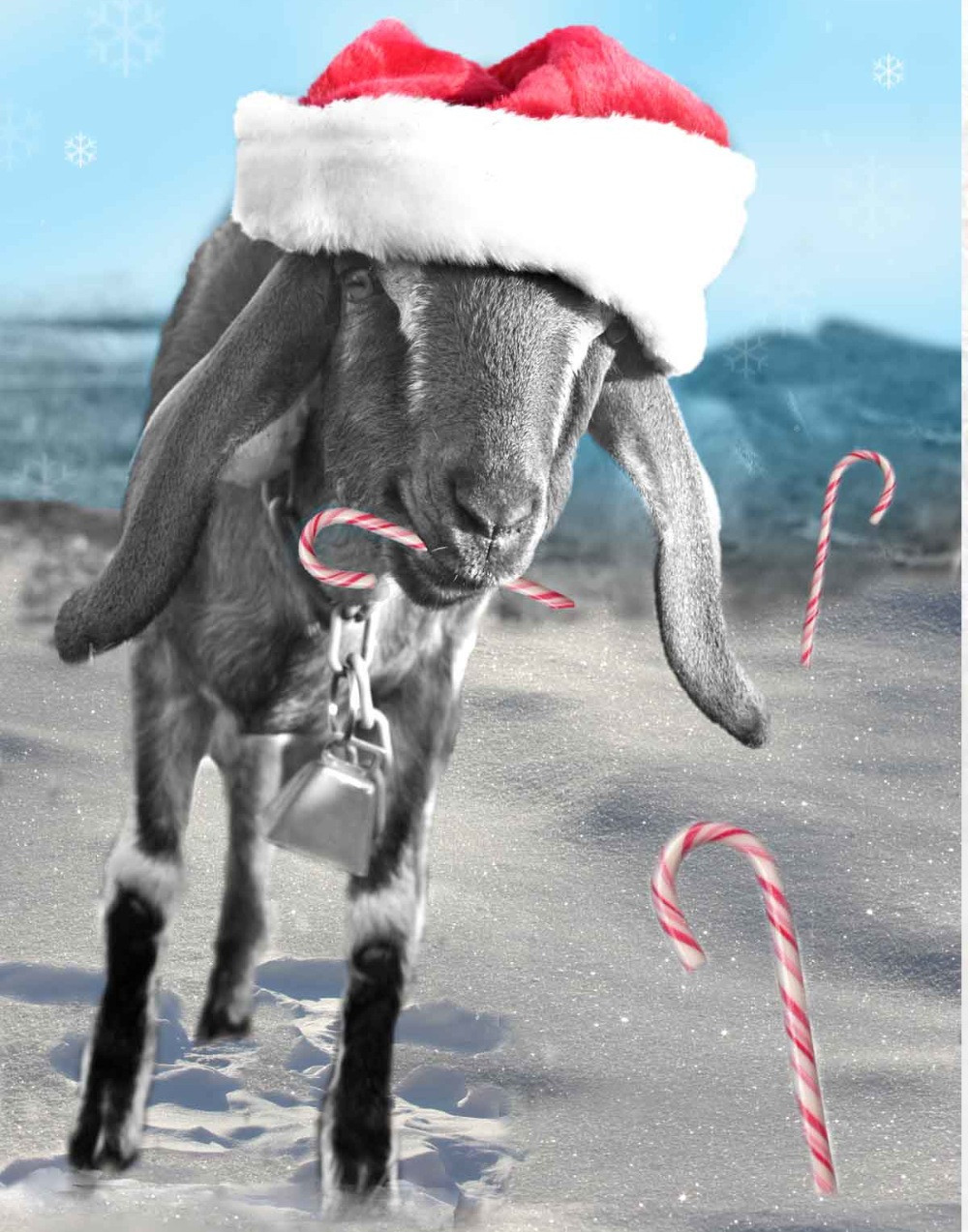Christmas goat with candy canes
