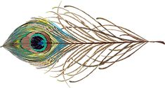 Peacock Feather.png