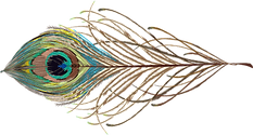 TVS_Peacock Feather.png