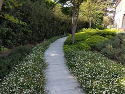 Projet Star Garden