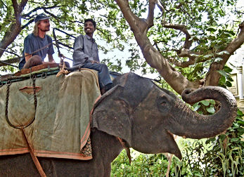 Mysore-elephant-trip-m-300dpi-detail-s2.