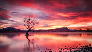 Wanaka Tree Sunrise
