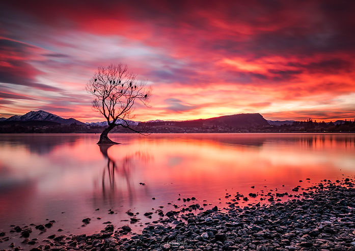 Wanaka Tree Sunrise: a burning red sky at the famous lonely tree in Lake Wanaka. New Zealand photography by Laurie Winter.