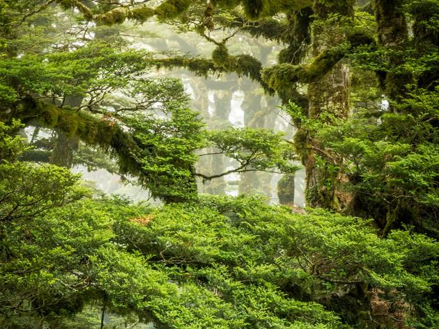 Misty Trees Lake Waikaremoana