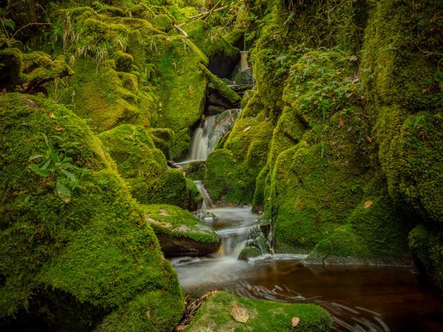 Mossy Stream at Oparara Basin