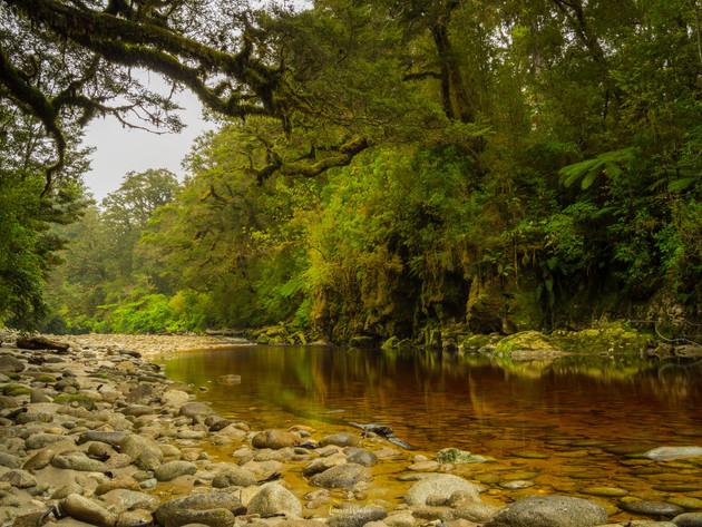 River Tannins in Oparara Basin