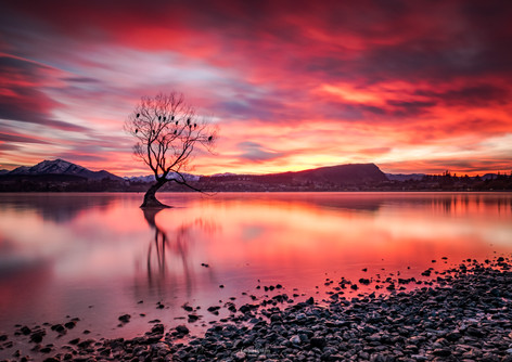 That Wanaka Tree Sunrise