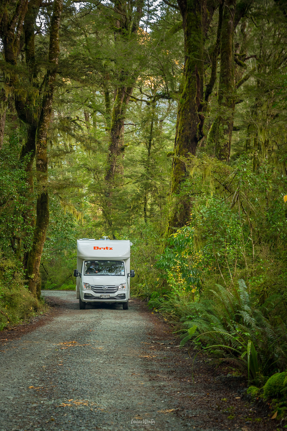 Trees tower over the Britz campervan on the road to Lake Gunn in Fiordland