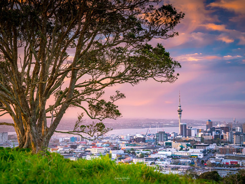 Mt Eden Tree and Sunset, Auckland