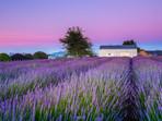 Sunrise at the Alphra Lavender Farm