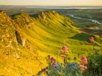 Pink Flowers on Te Mata Peak Hastings