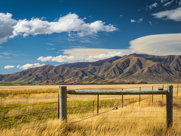 Golden Fields in the  MacKenzie Basin