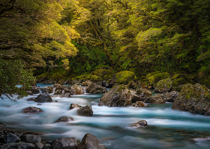 Hollyford River near Milford Sound in Fiordland. New Zealand Photography by Laurie Winter