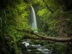 Dunedin Waterfall Nicols Falls