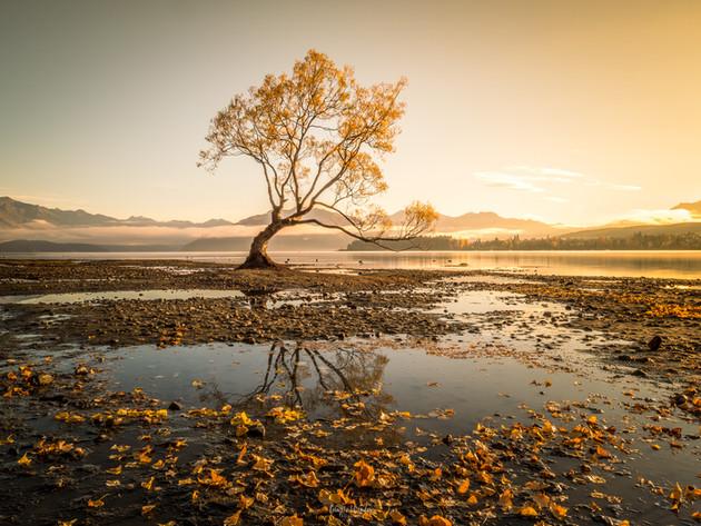 That Wanaka Tree in Autumn
