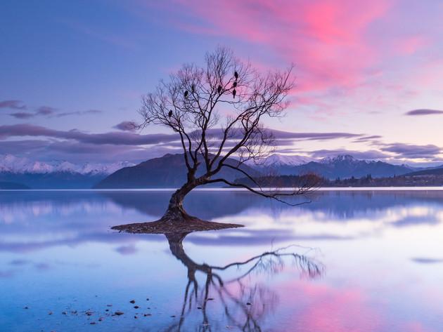 Beautiful Pink Clouds at That Wanaka Tree