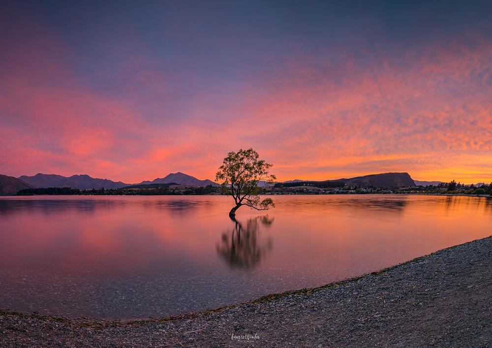 That Wanaka Tree Sunrise Lake Wanaka New Zealand